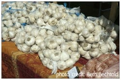 Bags of garlic at the Garlic Festival in Saugerties, NY