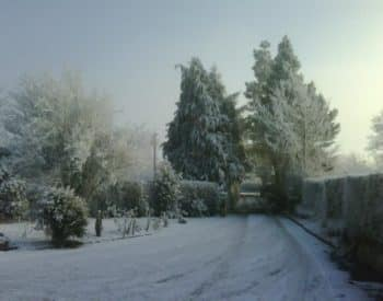 White snow-covered ground, green pine trees and faintly shining sunlight