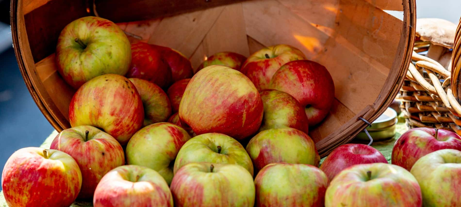 Brown bushel basket tipped over spilling out several green and red apples