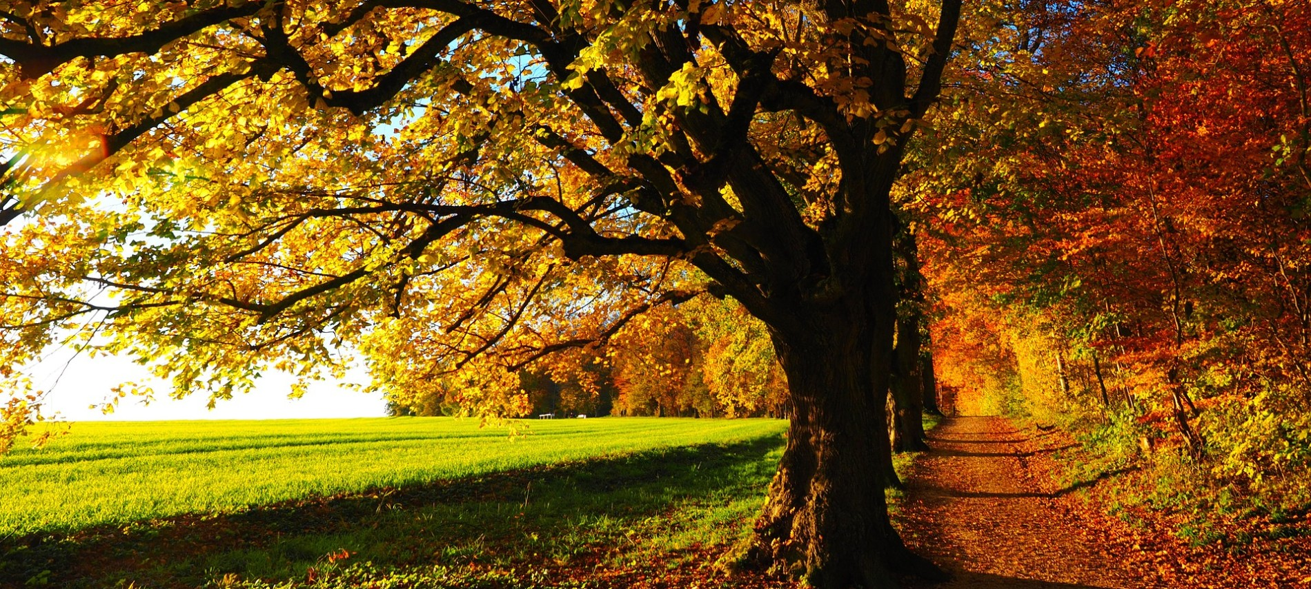 Green field next to path with large trees full of yellow, orange and red fall foliage