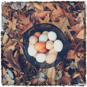 Basket of fresh eggs on fall leaves - photo by Autumn Mott on www.unsplash.com