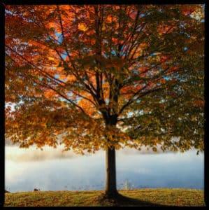 Fall tree by a lake - photo by  Aaron Burden on www.unsplash.com