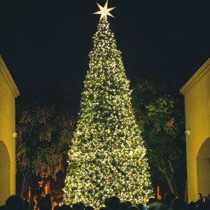 Stunning tall Christmas tree covered with white lights, with a star on top and people gathered below
