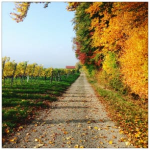 Dirt road with a winery in the distance and fall colors all around - image by lukas h unsplash.com
