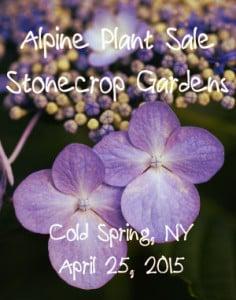 purple flowers with text Alpine Plant Sale at Stonecrop Gardens