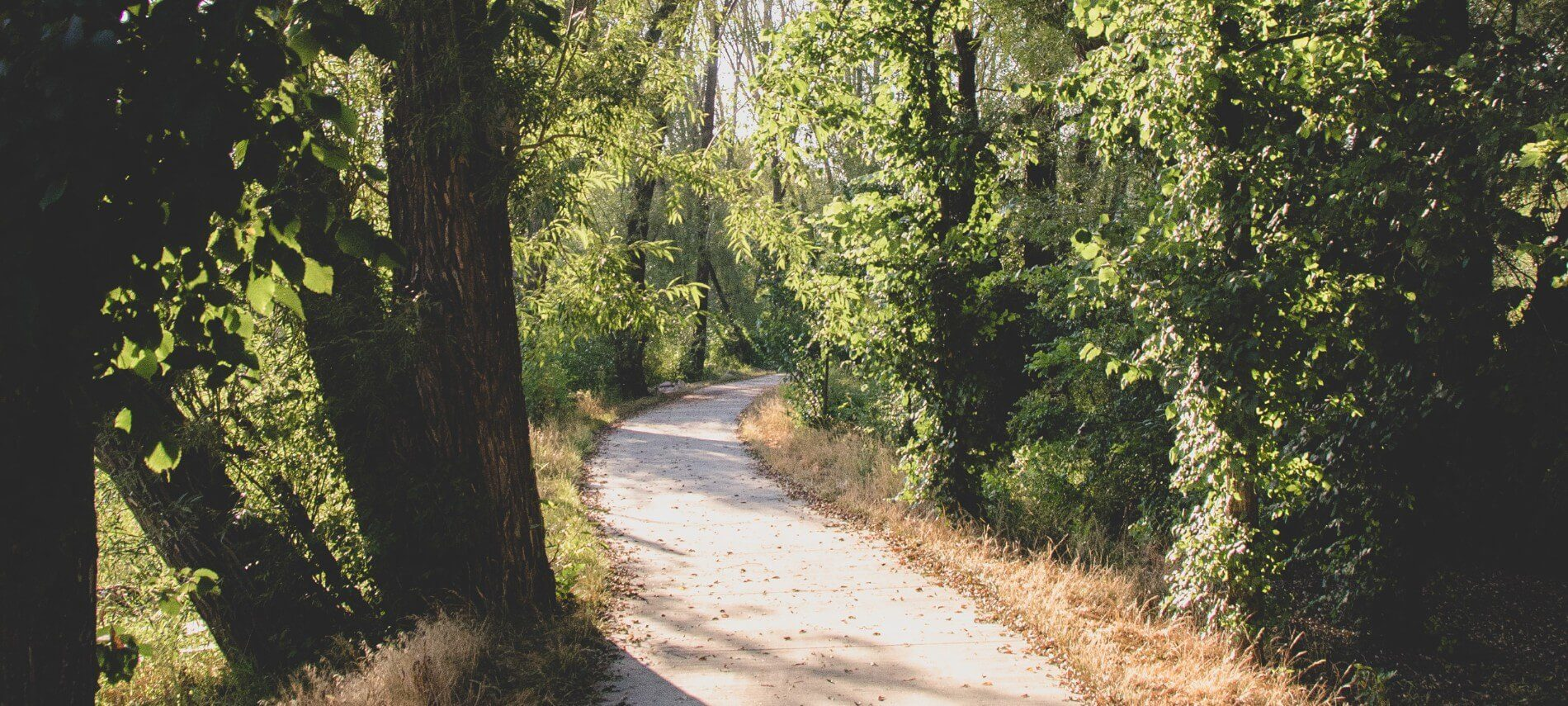 Paved path through a wooded area with tall trees and sunlight shining through