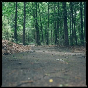Wooded Trail - photo by Phil Goodwin on www.unsplash.com