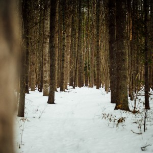 Dense wooded area with a snow covered path